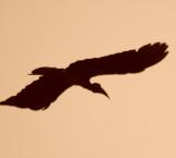 CSC_1135-silhoutte-bird