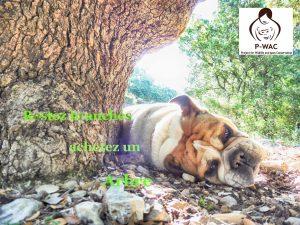 Henriette bulldog anglais