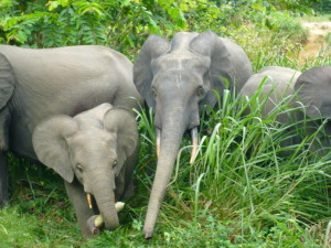 L1040781-5-elephants